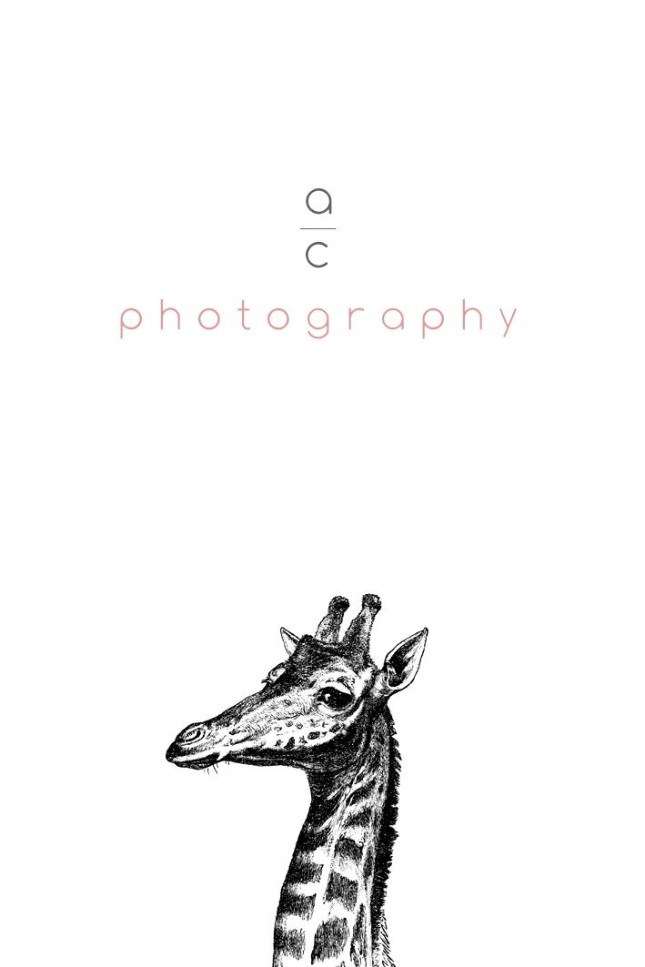 tarjeta alargada jirafa